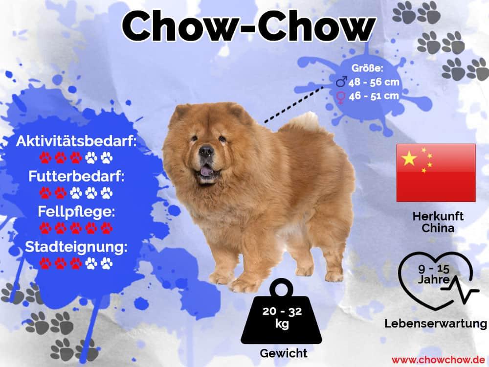 Chow-Chow Infografik